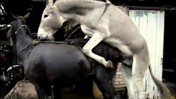 แอบถ่ายหีม้า แอบถ่ายม้าเย็ดม้า เย็ดหีม้า เย็ดม้า เย็ดกลางแจ้ง